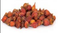 ZHI ZI  - Gardenia Fruit, (Capejasmine) - Fructus Gardeniae Herb