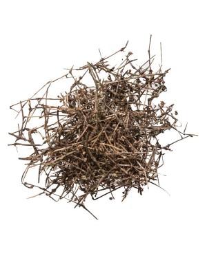BAI HUA SHE SHE CAO - Olderlandia - Hedyotis - Snaketongue Grass Herb - Spreading Hedyotis Herb - Herba Hedyotis Diffusae Herb