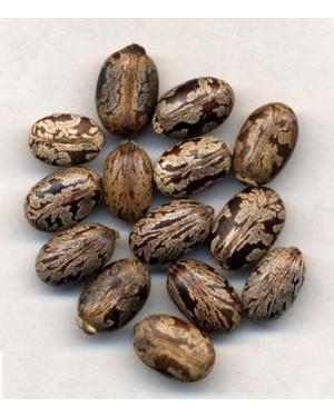BI MA ZI - Castor Bean - Semen Ricini Herb