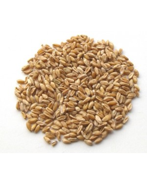 FU XIAO MAI - Shrivelled Wheat (Light Wheat) - Wheat Berry - Shriveled Wheat - Fructus Tritici Levis Herb